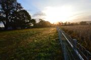<h5>Western field</h5>