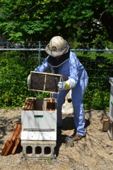 <h5>Jill is the beekeeper</h5>