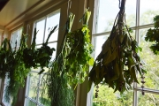 <h5>Drying herbs</h5><p>																																																																																					</p>