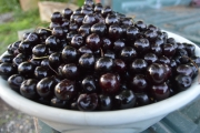 <h5>Cherries from our trees</h5><p>																																																																																					</p>