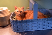 <h5>Sophie loves a basket</h5><p>																																																																																																																																								</p>